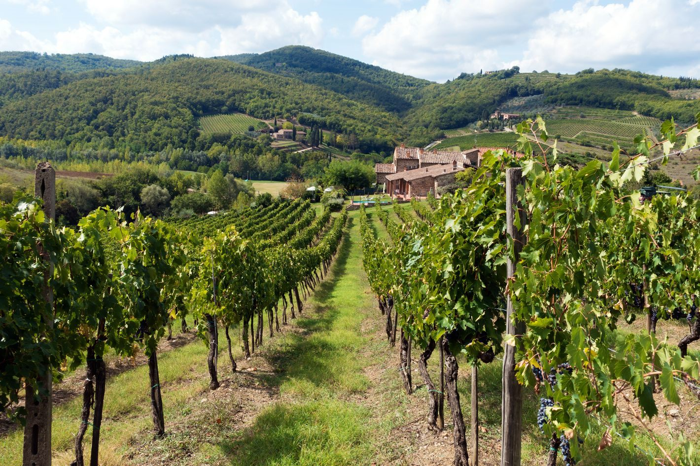 chianti-vineyards